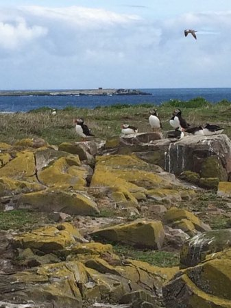 Farne Islands: photo2.jpg