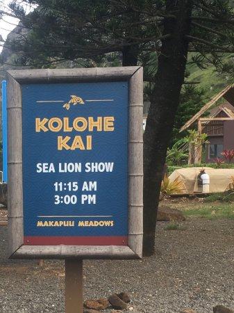 Sea Life Park Hawaii: The show