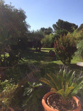 Carpentras, France : grote tuin met bomen zodat je ook in de schaduw kan genieten van de stilte