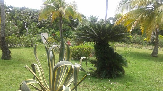 Calibishie, Dominica: COTTAGE GROUNDS