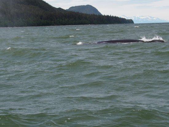 Harv and Marv's Outback Alaska: A Whale..........followed by