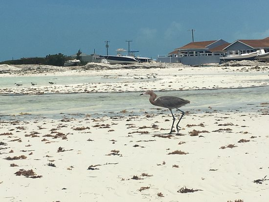 Five Cays Settlement, Providenciales: photo1.jpg