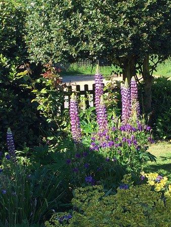 Angmering, UK: Loving the garden