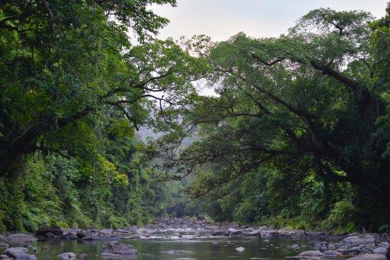 Atherton, Australien: Rainforest Creek