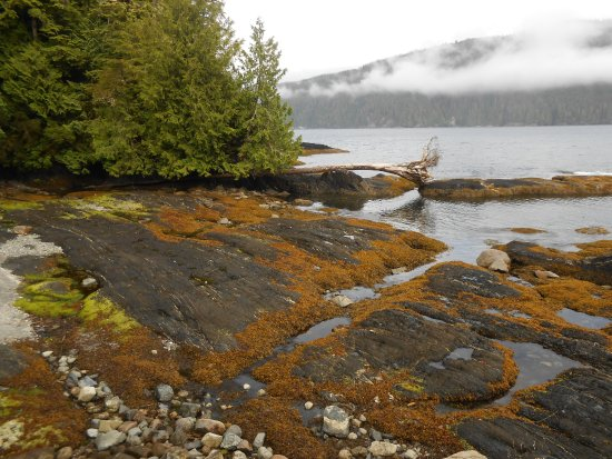Port Renfrew, Canadá: Our misty morning view from Cabin 4 with the tide out.