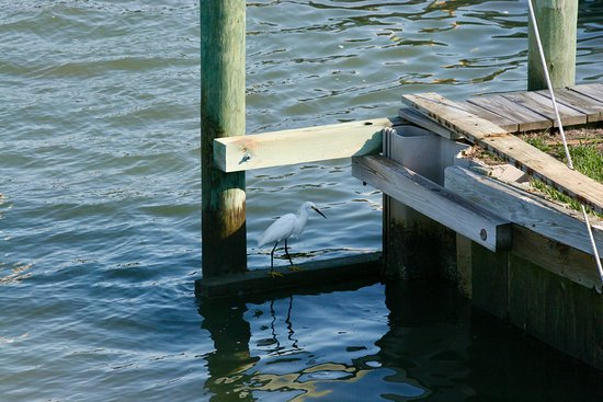 Anchor Inn: Shore birds like the pier too.
