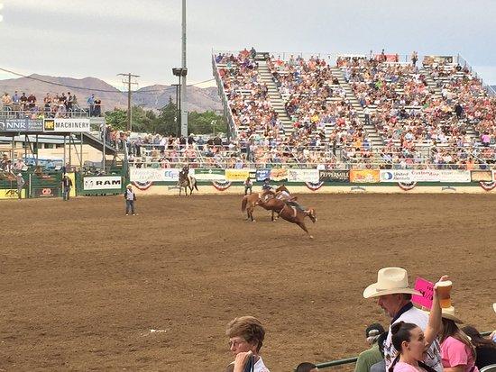 Reno Rodeo Cattle Drive: photo1.jpg