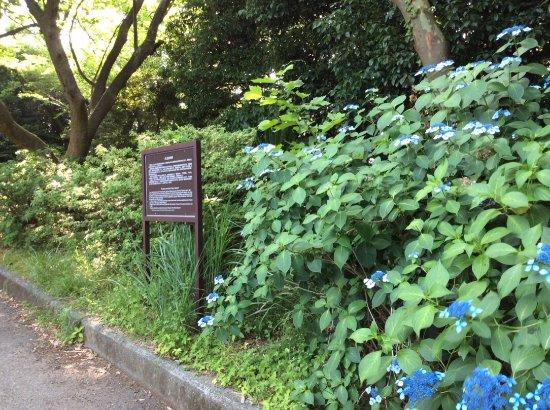Yasubumi Inoue Monument