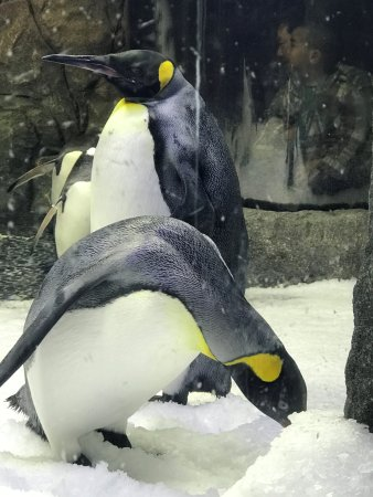 Real Sydney Tours: Penguins
