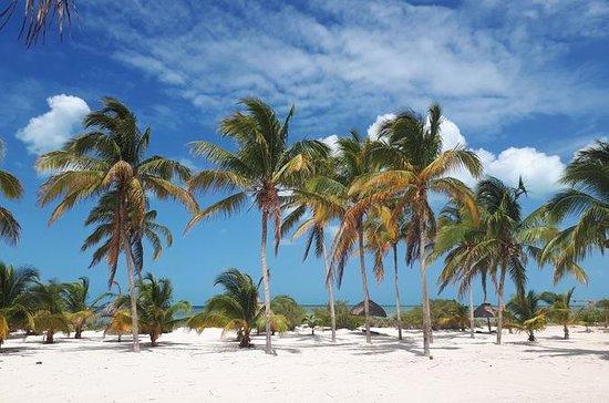 Coastal Bike Tour and Mangrove Cruise...