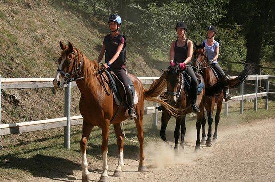 Promenade à cheval d'une demi-journée...