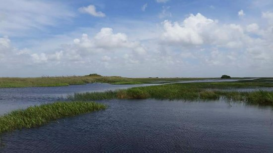 Coopertown Airboats: Gorgeous everglades