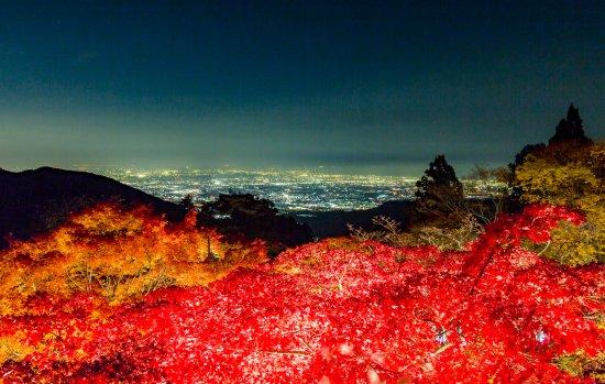 Isehara, Japan: 秋のライトアップ