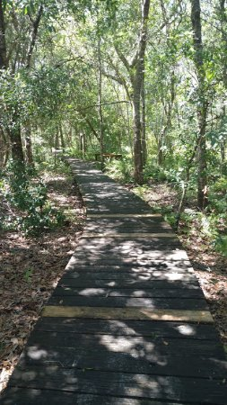 Lake Louisa State Park: The Nature Trail is mostly grass and sand, but has a very pretty wooden walkway near the beginni