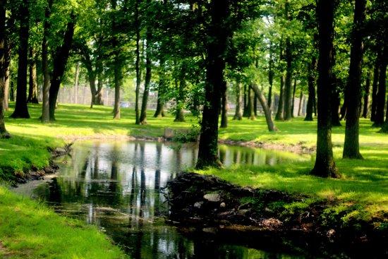 วูดบริดจ์, นิวเจอร์ซีย์: stream