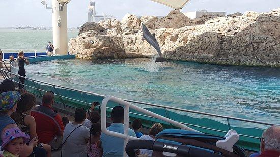 Texas State Aquarium: photo0.jpg