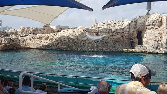 Texas State Aquarium: photo2.jpg