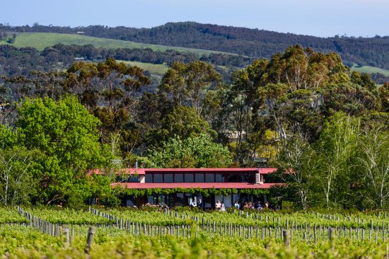 Willunga, Australia: View of the Lodge form the vineyard