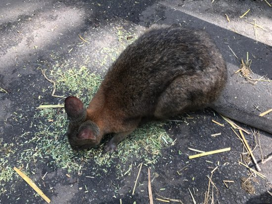 Blacktown, Australia: photo2.jpg