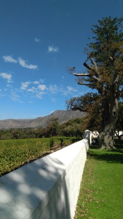 Constantia, South Africa: IMG_20170408_122120_large.jpg