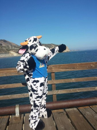 Avila Beach, Californien: 'Moo' watching for whales