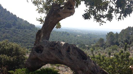 Binibona, İspanya: 20170616_111527_large.jpg