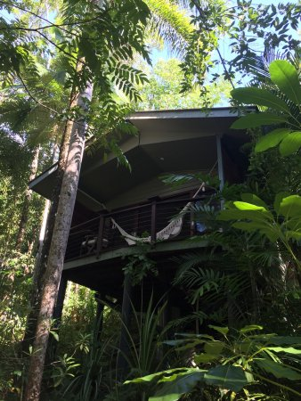 Mossman, Australien: Deluxe treehouse, snorkelling in the billabong and fig tree rapids