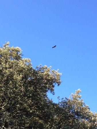 Monfrague National Park : águila la vista