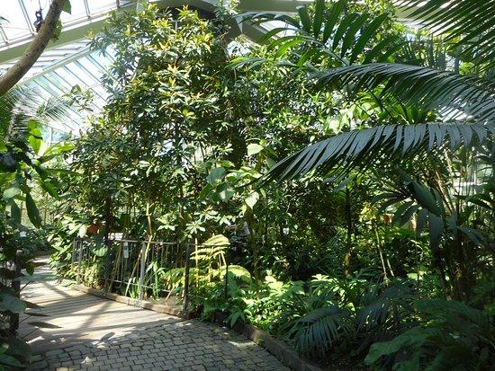 Palmengarten und Botanischer Garten: interno serra