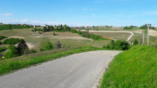 เซียนา, อิตาลี: spring time in the wine hills