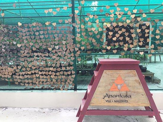 Anantara Veli Maldives Resort Photo