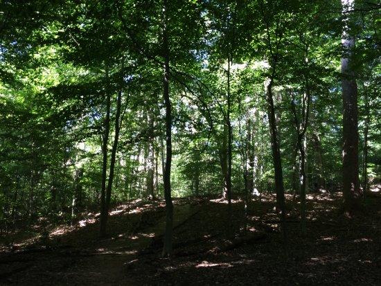 Whitehaven Park