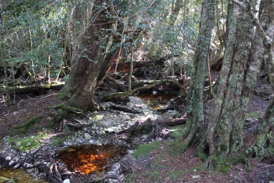 Cradle Mountain-Lake St. Clair National Park, Australia: example of forest at far end of Dove Lake
