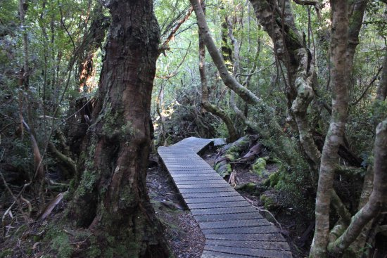 Cradle Mountain-Lake St. Clair National Park, Australia: example of boardwalk at far end of Dove Lake