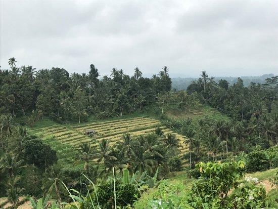 Jatiluwih Green Land: photo1.jpg