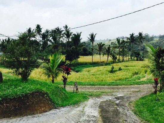 Jatiluwih Green Land: photo2.jpg