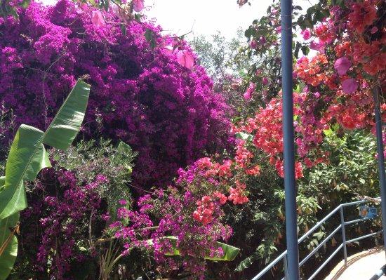 Bloem En Tuin : De prachtige bloementuin bij het terras foto van panorama