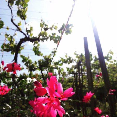 Cerro Largo Rio Grande do Sul fonte: media-cdn.tripadvisor.com