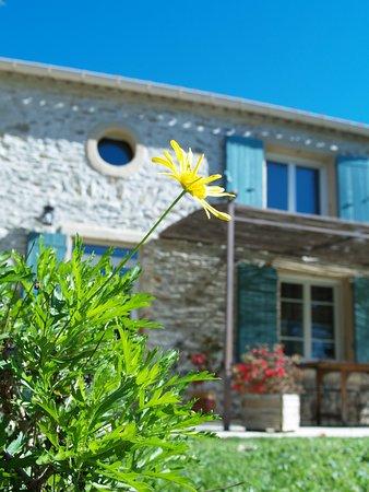 Peyriac-Minervois, Франция: Vue Maison et Terrasse