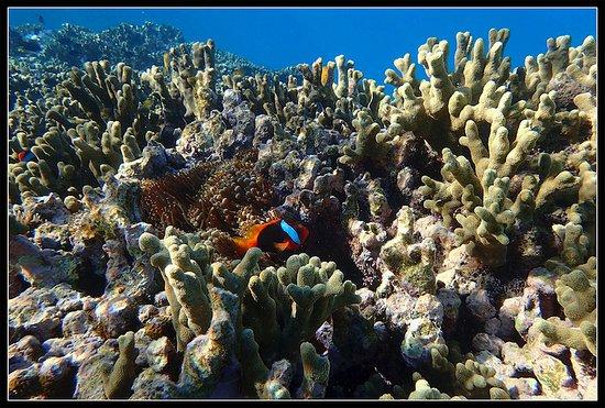 Seventeen Seventy, Australia: Clown-fish