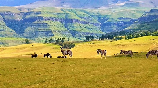 uKhahlamba-Drakensberg Park, South Africa: Cathkin Cottage is positioned in a beautiful estate with game.  Hikes are in abundance.