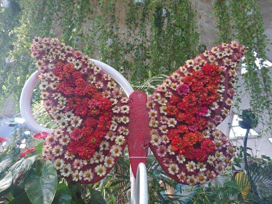 Dubai Butterfly Garden: Butterfly Garden 8