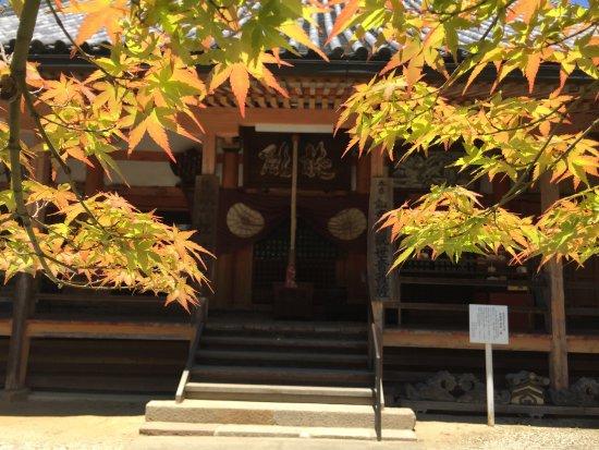Izumi, Japan: 紅葉越しの本堂