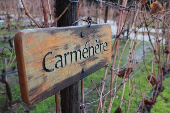 Pirque, Chile: Conhecidíssima uva