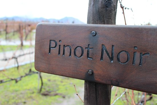 Pirque, Chile: Plantação de pinot noir