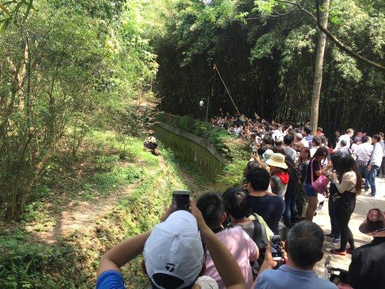 Chengdu Zoo : Panda Gigante