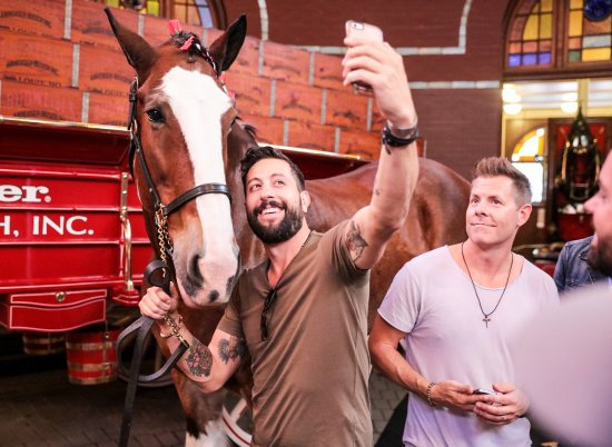 Budweiser Brewery Experience (Saint Louis) - 2019 All You