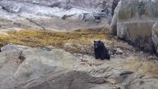 แคมป์เบลล์ริเวอร์, แคนาดา: Black Bear