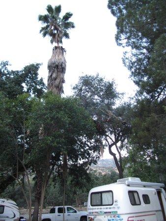 Sequoia RV Ranch-bild