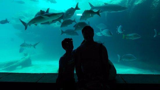 Marine Habitat at Atlantis: Aquarium near the Beach towers